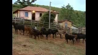 getlinkyoutube.com-Reportagem Globo Rural 2003 ''MUTIRÃO do Porco na Serra da Canastra'' Delfinópolis mg