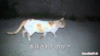 getlinkyoutube.com-【瀬戸の野良猫日記】ボス猫、虐待された?人間が怖くなった猫 Stray cat that has been abused by humans