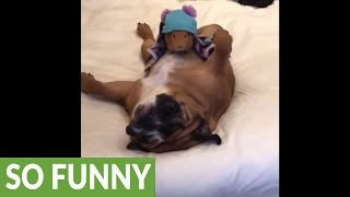 Bedtime mannequin challenge for dogs and guinea pigs