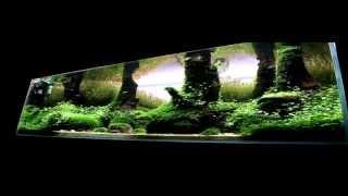getlinkyoutube.com-360 tank Piotr Dymowski IAPLC Elite Aquarium