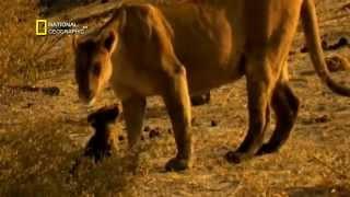 getlinkyoutube.com-افضل فلم وثائقي عن حياة الاسود