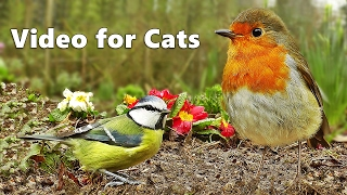 getlinkyoutube.com-Videos for Cats to Watch : Bird Sounds & Song Extravaganza