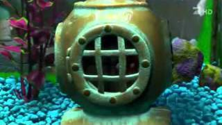 getlinkyoutube.com-Finding Nemo   Mpourmpoulithres