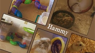 getlinkyoutube.com-Hammys New Cage Setup | DIY Hamster Cage