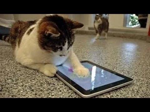 videos graciosos 2014 - videos de risa de gatos chistosos jugando con el Ipad
