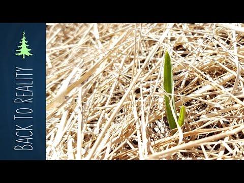 Spring Garden Update: Hugelkultur, Ruth Stout, and Garlic Sprouts!