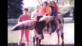 getlinkyoutube.com-اغرب الحيوانات في العالم