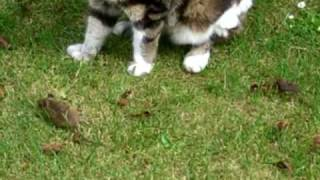 getlinkyoutube.com-Cat Kills Mouse