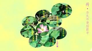 getlinkyoutube.com-荷花香 ‧ 麥潔文  Lotus Fragrance ‧ Connie Mak