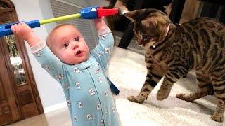 getlinkyoutube.com-BABY VS. KITTEN!