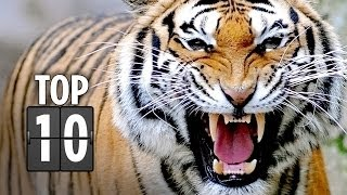 getlinkyoutube.com-Top Ten Horrific Animal Attacks in Movies (2013) HD