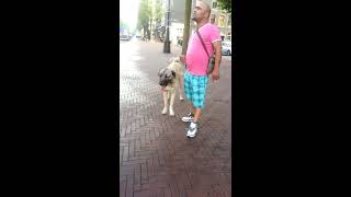 getlinkyoutube.com-kangal vs pitbull amsterdam oost 2013