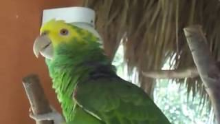 getlinkyoutube.com-Perico cantando que bonito soy