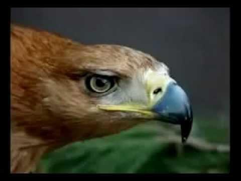 La Superacion Del Aguila - Motivacion y Superacion Personal
