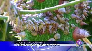 Jardín Botánico de Naples ofrece actividades para toda la familia