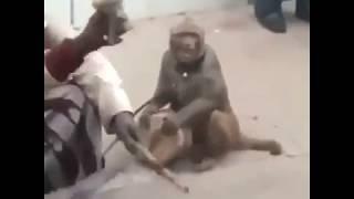 SHUHUDIA NYANI WAKICHEZA MZIKI HILI NI BONGE LA BURUDANI