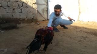 getlinkyoutube.com-مدرب الهراتي أحمد الشلش.mp4