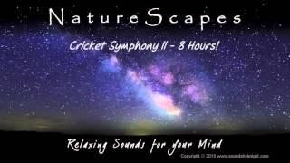 getlinkyoutube.com-🎧 NIGHT TIME CRICKETS - 8 Hours of Relaxing Cricket Sounds to help you Study & Sleep