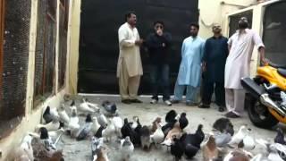 getlinkyoutube.com-Khadriala Qaiser bhai k Fancy Kabootar
