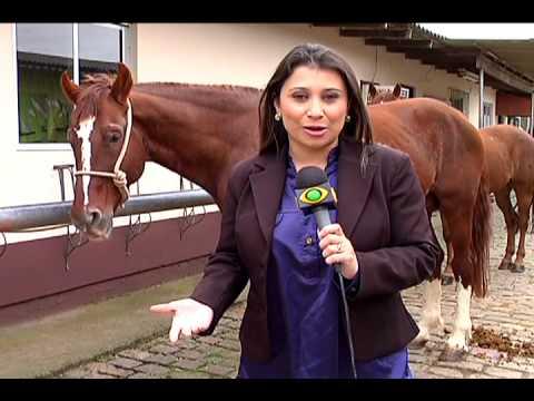 Florianópolis - Doação Cavalos