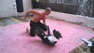 "getlinkyoutube.com-Blue nose pitbull sparing . More on Facebook "" Ibiza k9 behavior ore on FB Steve Larbrisseau"