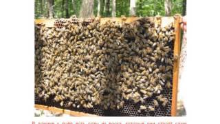 getlinkyoutube.com-Как пчелы делают мед