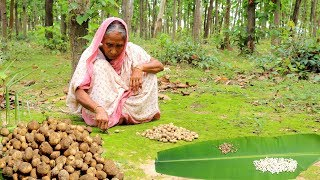 Find Most Expensive GOL MUSHROOM from Forest & Cooking by our Grandmother | Village Food