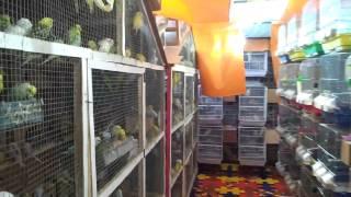 getlinkyoutube.com-مزرعة لتربيه طيور البادجي