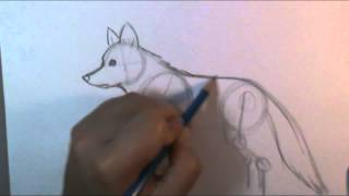getlinkyoutube.com-How to draw a wolf body