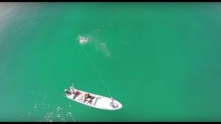 getlinkyoutube.com-Tarpon Drone Fly Fishing Mendozaflyshop.com Pesca con Mosca