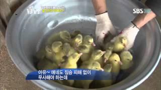 getlinkyoutube.com-TV 동물농장 462회_03