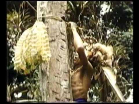Adat Dan Kehidupan Suku Di Kalimantan