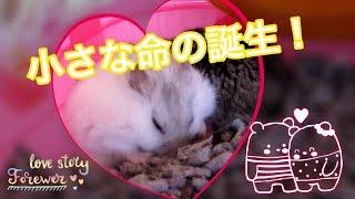 getlinkyoutube.com-出産中 ① (苦手な方はスルーを) ♪ハムスター♪  Under childbirth. Hamster