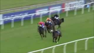 The Most Dangerous Horse  Racing must see