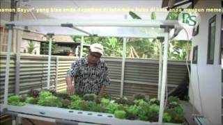 getlinkyoutube.com-Hidroponik Tanaman Sayur, Teknik Budi Daya Tanpa Tanah