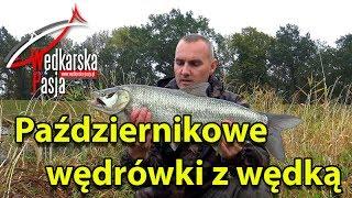getlinkyoutube.com-Październikowe wędrówki z wędką   odc.106   spinning z brzegu   wędkarstwo