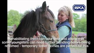 RSPCA Appeal - Fostering Young Rescue Horses And Ponies