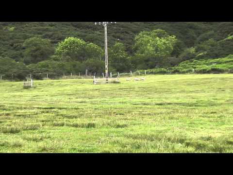 Gairloch & District Sheepdog Trials 2011 [ Part – 3 of 5 ]