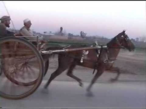 my horse race peshawer ring road 2011