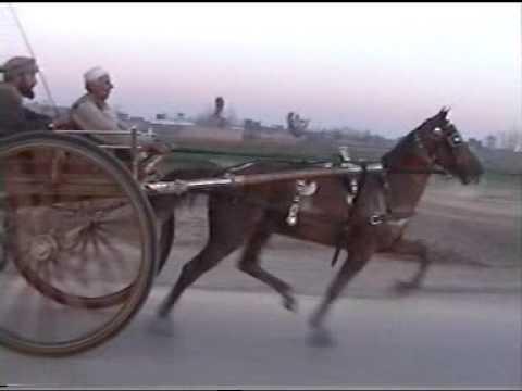 my horse race peshawer ring road 2011