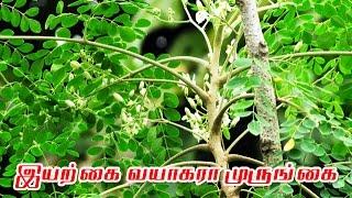 இயற்கை வயாகரா முருங்கை | Drum stick | Tamil Maruthuvam