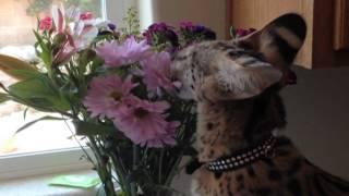 getlinkyoutube.com-Beautiful Kitty