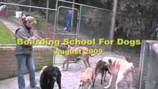 getlinkyoutube.com-The Alpha Canine Group presents Practical Canine Behavioural Rehabilitation