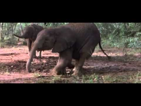 Drunk Animal-Kafshe te Dehura