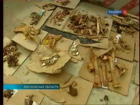 Раскопки Бородинской битвы