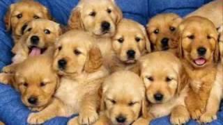 getlinkyoutube.com-10 PERRITOS  INFANTIL -Children 10 puppies