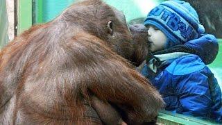 getlinkyoutube.com-Zoo Animals Attacks ★ Zoo Animals Getting Angry! [Funny Pets]