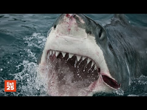 25 TERRIFYING Shark Attack Stories