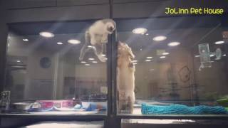 Smart Kitten Escapes Her Cage To Meet Her Puppy Love