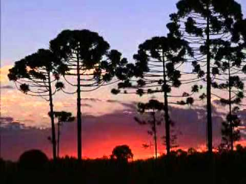 Filme sobre Araucaria